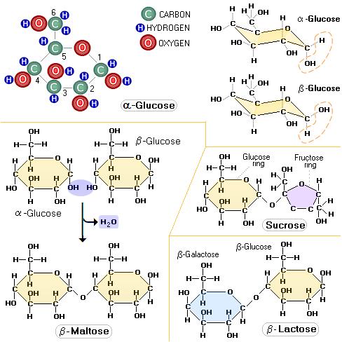 Molecular weight of glucose ribose manose